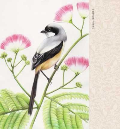 Купить с кэшбэком Chinese Colored Pencil Drawing Flower and Bird Art Painting Book