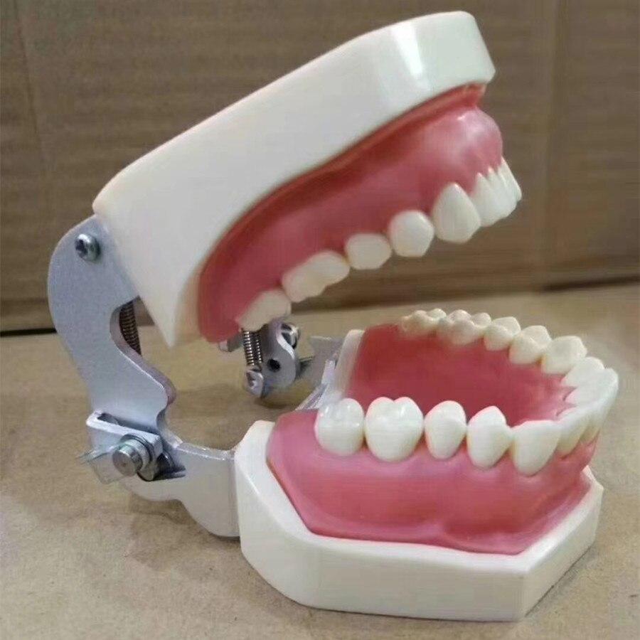 100% modelo de alta qualidade dental universal