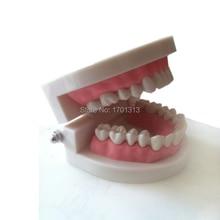 Медицинский инструмент для обучения модели зубные Стоматологические модели специальные украшения клиника украшения на заказ фигурки