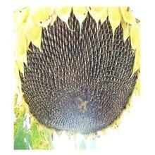 Бесплатная доставка Оригинальной упаковке 40 г Ароматный семян подсолнечника семена, Урожая 90-100 дней