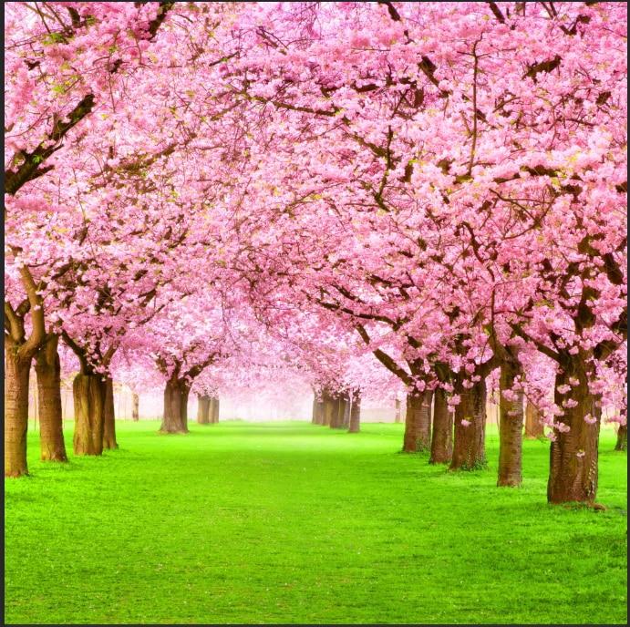 8x8ft Pink Sakura Flowers Blossom Park Tree Path Grass Tunnel Custom Photography Studio