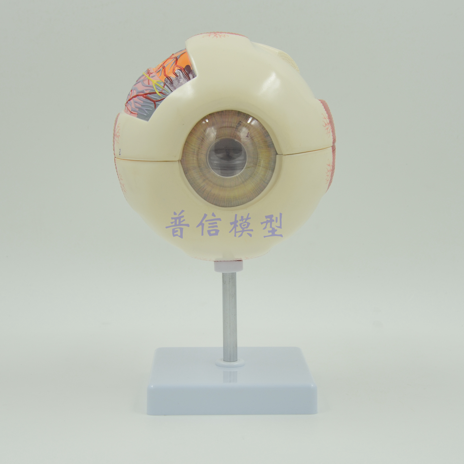 Buy eyeball anatomy model and get free shipping on AliExpress.com
