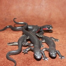 PVC figure Doll model toy The simulation model toy lizard reptile Red cheek salamander8pcs/set