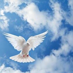 SKB-021 голубь летать в облака приостановить ПВХ, эластичная, Потолочная пленка для дома и потолков