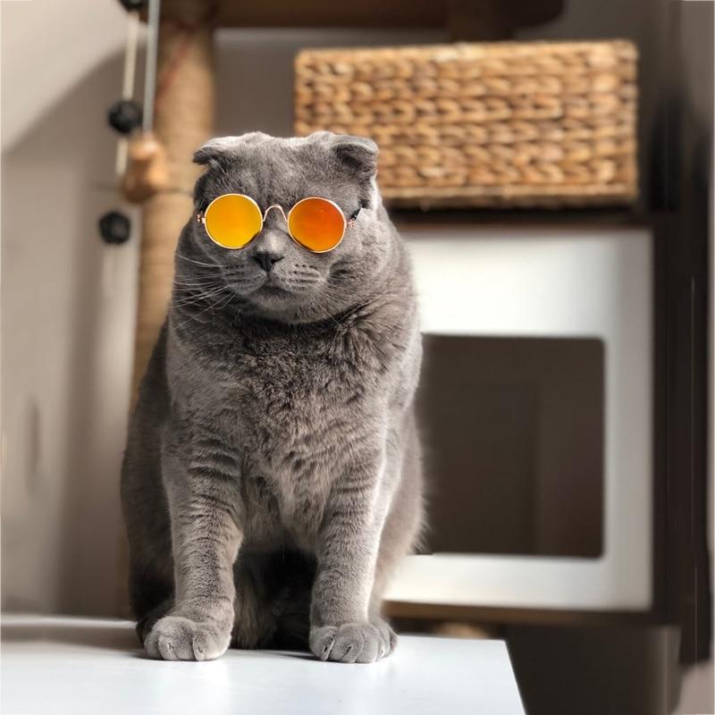 pet sunglasses_14