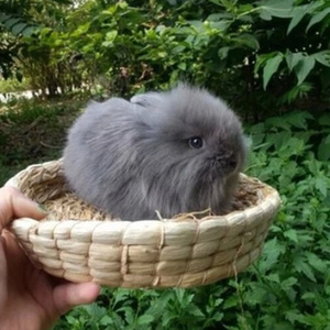 Pet Hamster Nest Woven Natural