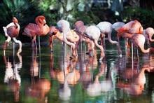 Laeacco Photography Background Flamingos Lake Bokeh Birthday Party Wallpaper Scenic Photographic Backdrop Photocall Photo Studio allenjoy photography backdrop spring grass white flower bokeh green background photocall photographic photo studio