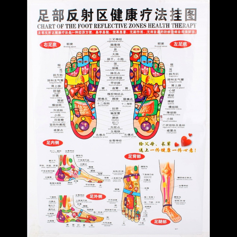 hight resolution of chart of the foot reflective zone health therapy massage acupuncture acupoints medical study chinese english 68 48cm waterproof