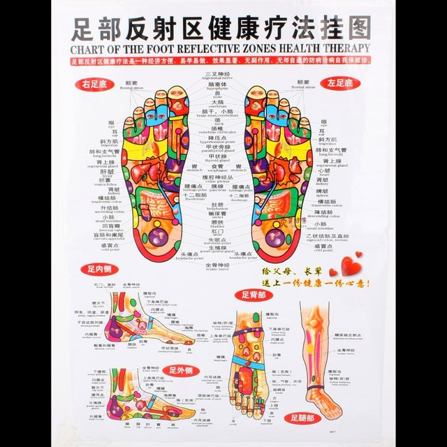 Chart of the foot reflective zone health therapy massage acupuncture acupoints medical study chinese english cm waterproof also rh aliexpress