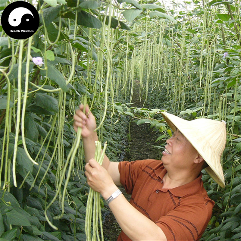 Купить зеленые Длинные бобы овощные Semente 200 шт. завод вигны Винья Unguiculata