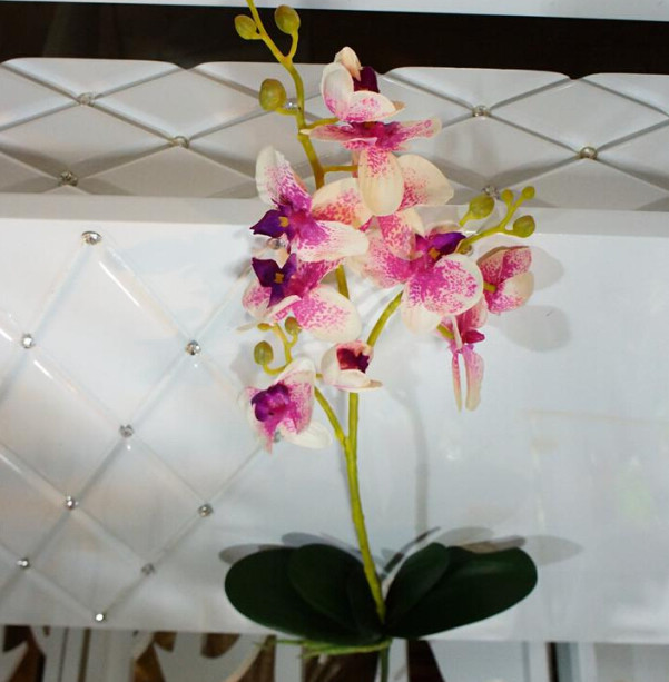orchidee 2 couleurs