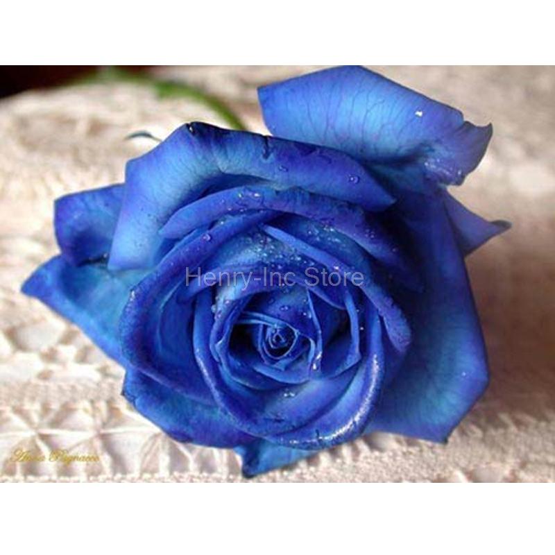 Belle Image Rose Bleu