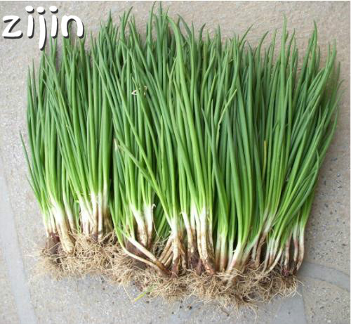 Freeshipping 200pcs small green onion bonsai Organic heirloom bonsais vegetables heathy Kitchen cooking food plant pot