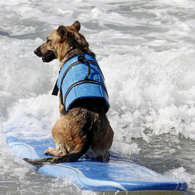 Pet Dog Life Jacket Safety Clothes Life Vest Collar Harness Saver Pet Dog Swimming Preserver lothes Summer Swimwear