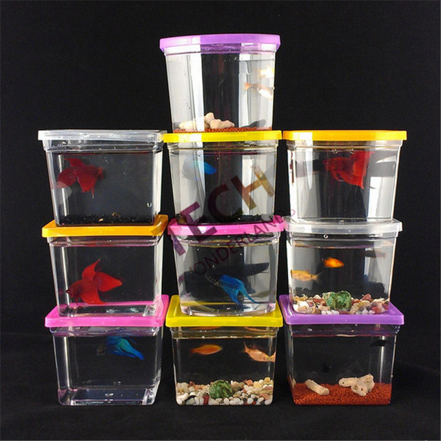 Buy 10 7 5 8 5cm 10pcs colorful betta for Fighting fish tank