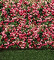 Photography Backdrop 5x7 Spring Flowers flower backdrop wall Birthday Party Backdrops Custom Photo Wedding Studio Background