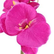 Orchid Flower Bouquet for Home Decor