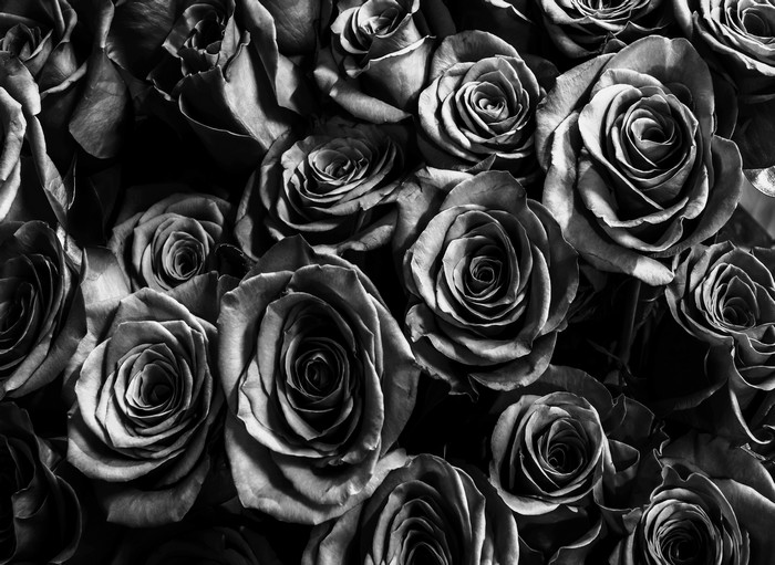 Dark Black Roses Flowers Backdrop Photo Vinyl Cloth High