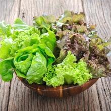 цена на Vegetable plant 200pcs/bag NON-GMO Mixed orangic Lettuce plant Healthy vegetable bonsai plant home garden