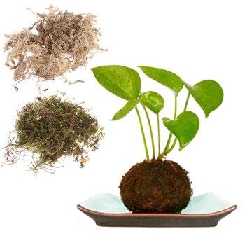 Flor Matriz Ecológica do Vaso de Planta Seca Musgo Crescendo Mudas Paisagem