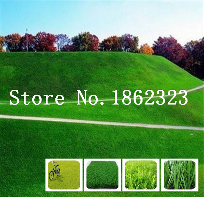 Pc'er. 1000 stk Japansk skov græsplæne, flerårige evergreen græsplæne bonsai plante, smukke have prydplanter, let at dyrke