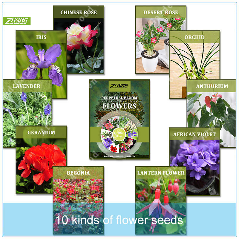 best top 10 all year flowering plants brands and get free