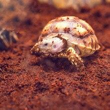 Натуральный тропический Террариум подложка кокосовой шелухи грунт кирпич Террариум вивария постельные принадлежности для рептилий геккон ящерица черепаха лягушка