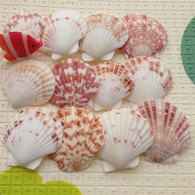 24pc/lot 100% Natural 4 8cm colourful seashells crafts, natural colour, idea for home fish tank aquarium decoration wedding giftideas for giftscraft ideascraft decorating ideas