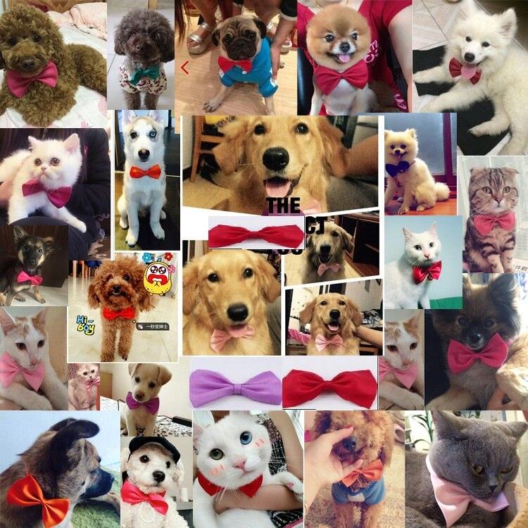 500 ชิ้น/ล็อต EMS จัดส่งฟรีสัตว์เลี้ยงคอ Tie puppy Dog Bow Tie Bowtie Cat Tie Pet Grooming อุปกรณ์ผสมสี-ใน อุปกรณ์เสริมสุนัข จาก บ้านและสวน บน   3