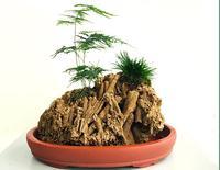 Natural raw stonel landscaping rockery aquarium decoration bonsai Water grass Plant root growth adsorption