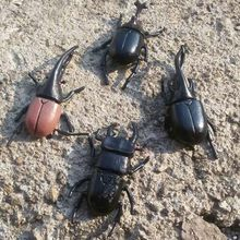 6pcs/lot 5.5cm simulation beetle Toys Special Lifelike Model Simulation insect Toy nursery teaching aids joke toys GYH(China)