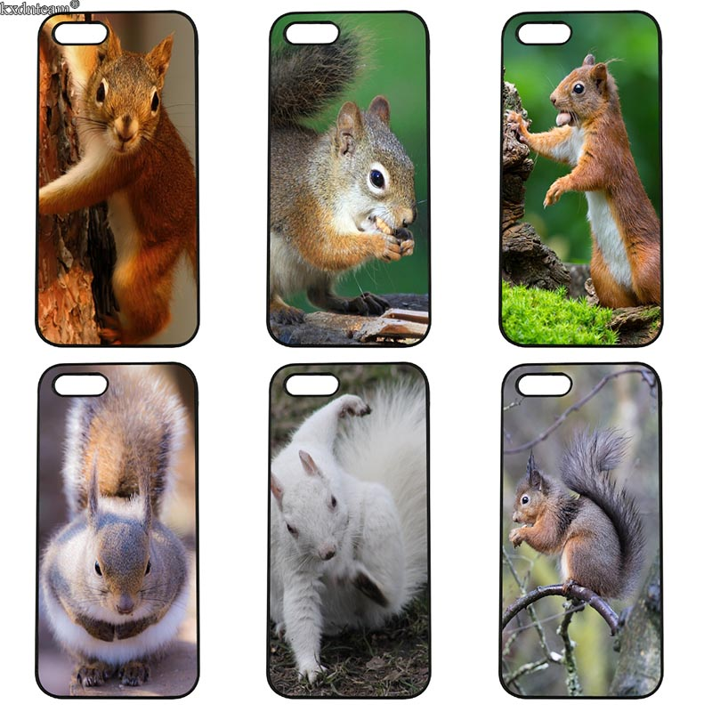 Cell Phone Case Squirrel Guinea Pig Mouse Peanut Greedy Hard Cover for iphone 8 7 6 6S Plus X 5S 5C 5 SE 4 4S iPod Touch 4 5 6