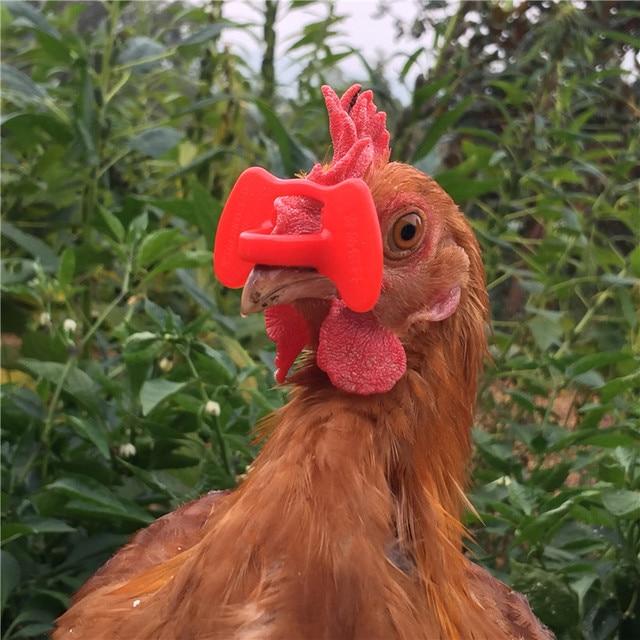 500 Produk Tidak bolt kacamata ayam Ayam perangkat manajemen Merpati Puyuh kacamata Anti-mematuk kacamata Gratis pengiriman