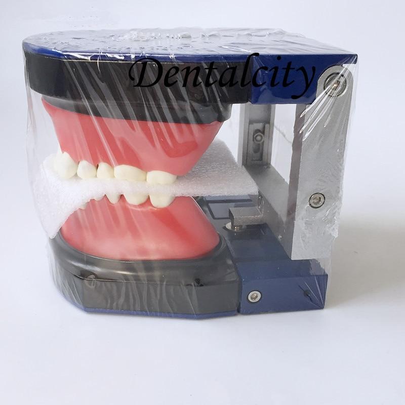 Dental  M8017 Typodont Teeth Model/Orthodontic SteelTeeth ModelDental  M8017 Typodont Teeth Model/Orthodontic SteelTeeth Model