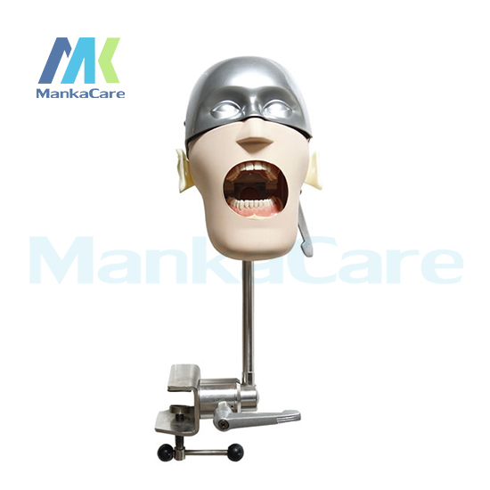 Manka Care - Stainless Steel Simple Head Model Oral Model Teeth Tooth Model
