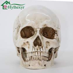 Medical Model Human Head Model Resin Replica In Natural Size 1: 1 Halloween Decoration High Quality Home Decorative Crafts Skull