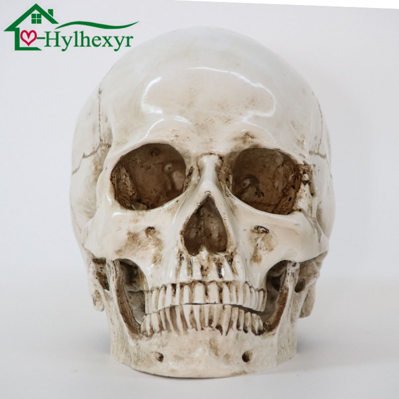 Medizinische Modell Menschlichen Kopf Modell Harz Replik In Natürliche Größe 1: 1 Halloween Dekoration Hohe Qualität Zu Hause Dekorative Handwerk Schädel