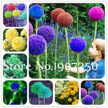 100 pcs Colorful Allium Giganteum Bonsai, flowers bonsai outdoor, Semenata of flowers For Garden Ornaments Courtyard Planting
