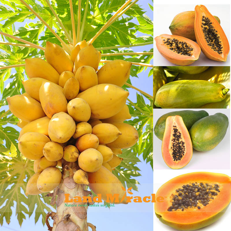 RUIT LOV E R'S SEED CO. A division of Fruit Lover's Nursery TROPICAL FRUIT SEED LIST Dear Rare Fruit enthusiasts, here are the rare fruit seeds and exotic tropical fruit seeds we have for sale.