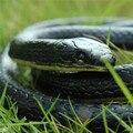 Serpiente De Juguete Safari Jardín Realista de Goma Suave Apoyos de Halloween Broma Broma Regalo de Unos 130 cm de La Novedad y de la Mordaza Hacer Bromas juguetes