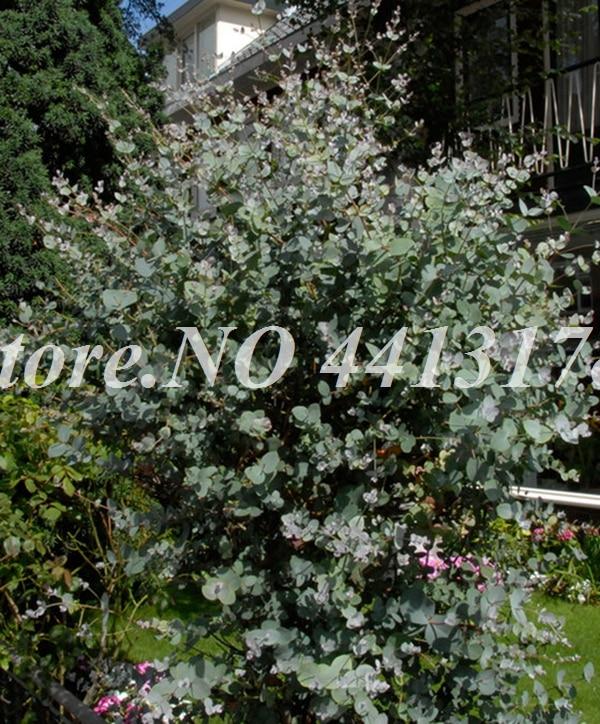 12117-06-BAKIE_20130124161531