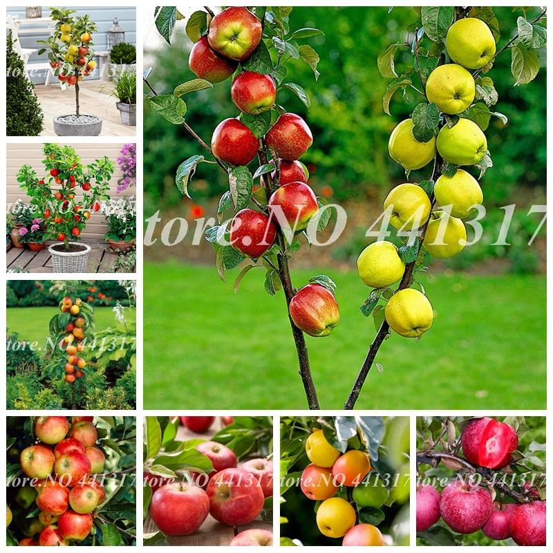 30 Pcs/ Bag Dwarf Apple Bonsai Miniature Apple Tree Sweet Organic Fruit Vegetable Potted Indoor Or Outdoor DIY Home Garden Decor