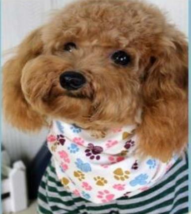100pcs/lot  Big sale 2019 Adjustable New Dog Puppy Pet bandana Collar  scarf dog bandanas Cotton Pet tie SP 1-in Collars from Home & Garden    1
