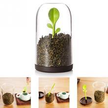 Tea Caddy Green Shoots Novelty Food Storage Tanks Seal Pot Sealed Tank Small Storage YH-460106 стоимость