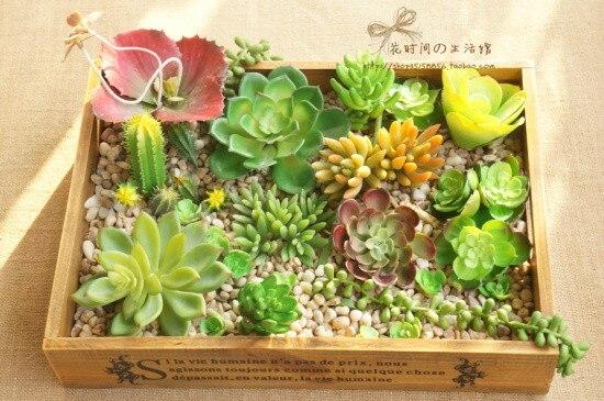 (6 ცალი / ლოტი) Succulents - დღესასწაულები და წვეულება - ფოტო 5