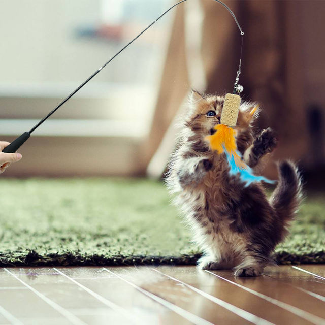 5pcs Cute Cat Toy Interactive Kitten Scratching Teaser Wand Fish Feather Cat Scratcher Toys Flexible Wands With Replacement Head