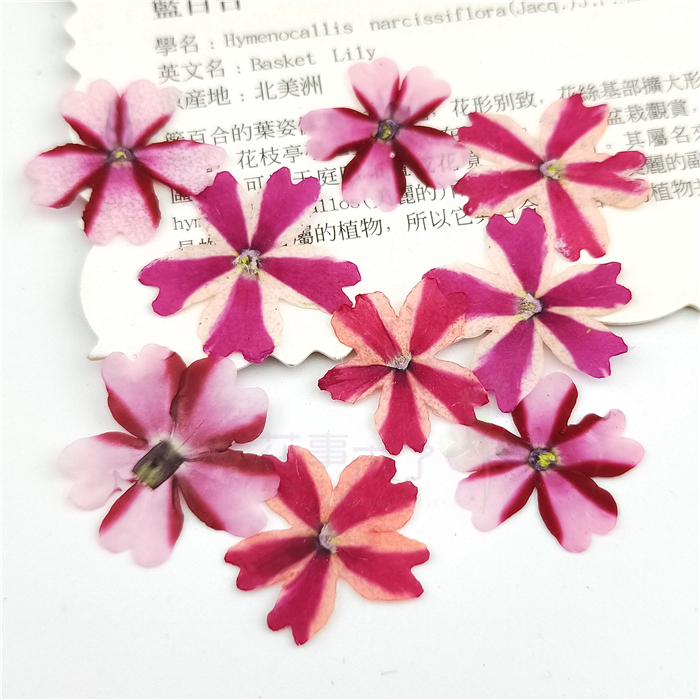 12pcs Natural Verbena Flowers Pressed Dried Flowers for DIY Jewelry Craft