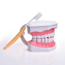 Demo / can pull teeth / mouth model Teach children to brush teeth model with teethbrush