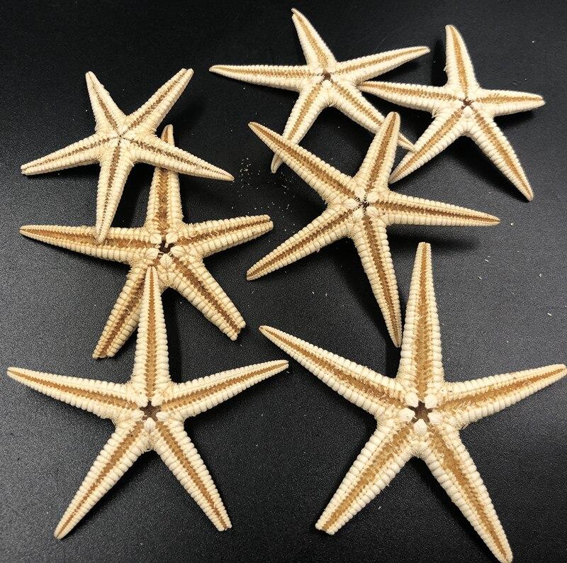 Size 3-4cm 50pcs Mini Starfish Craft Decoration Natural Sea Stars Five Finger DIY Beach Cottage Wedding Decor DIY  Wedding
