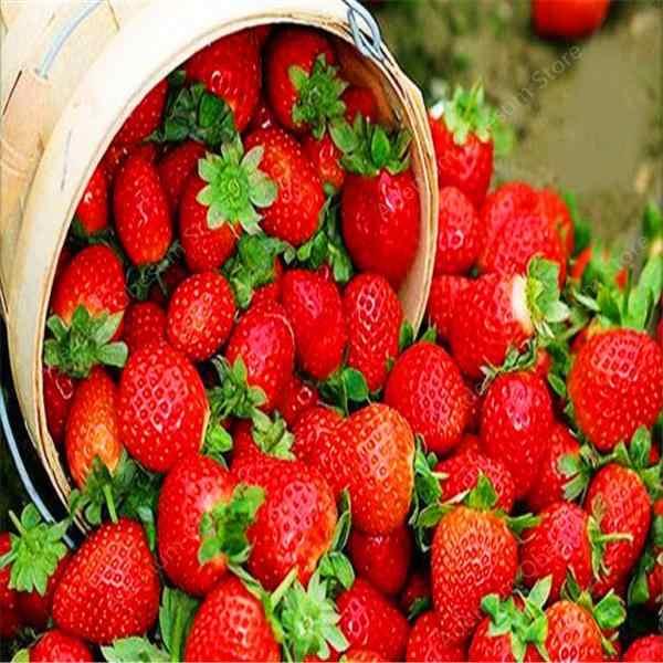Korting! 200 pcs Giant Aardbei Bonsai Super Grote Rode Aardbei Fruit Bonsai Heerlijke Bonsai Plant Gift Tuin Gratis Verzending